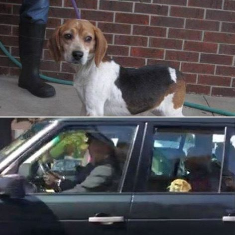 Meghan Markles Dog Was Reportedly at the Royal Wedding Reception