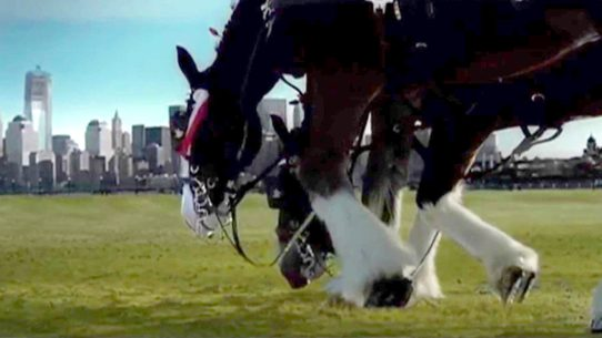 Budweiser 911 clydesdale tribute commercial video clip shows an aired once only budweiser commercial paying tribute to 911 victims aloadofball Gallery