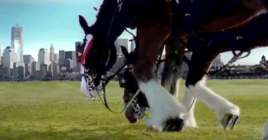 Budweiser 911 clydesdale tribute commercial video clip shows an aired once only budweiser commercial paying tribute to 911 victims aloadofball Images