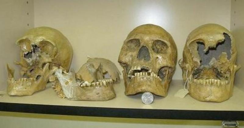 Smithsonian Admits To Destruction Of Thousands Of Giant Human