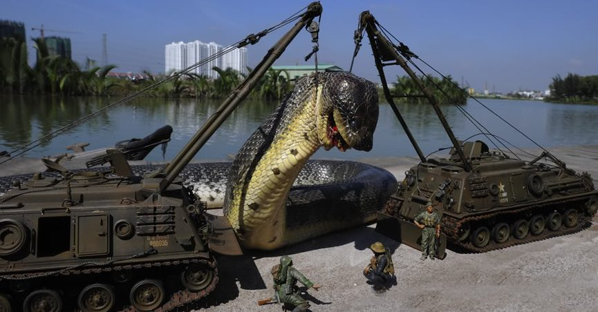 FACT CHECK: World's Largest Snake Captured in the Amazon?