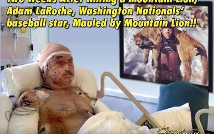 Mountain lion attack victim - photo#38