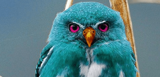 FACT CHECK Does A Photograph Depict Teal Colored Species Of Owl