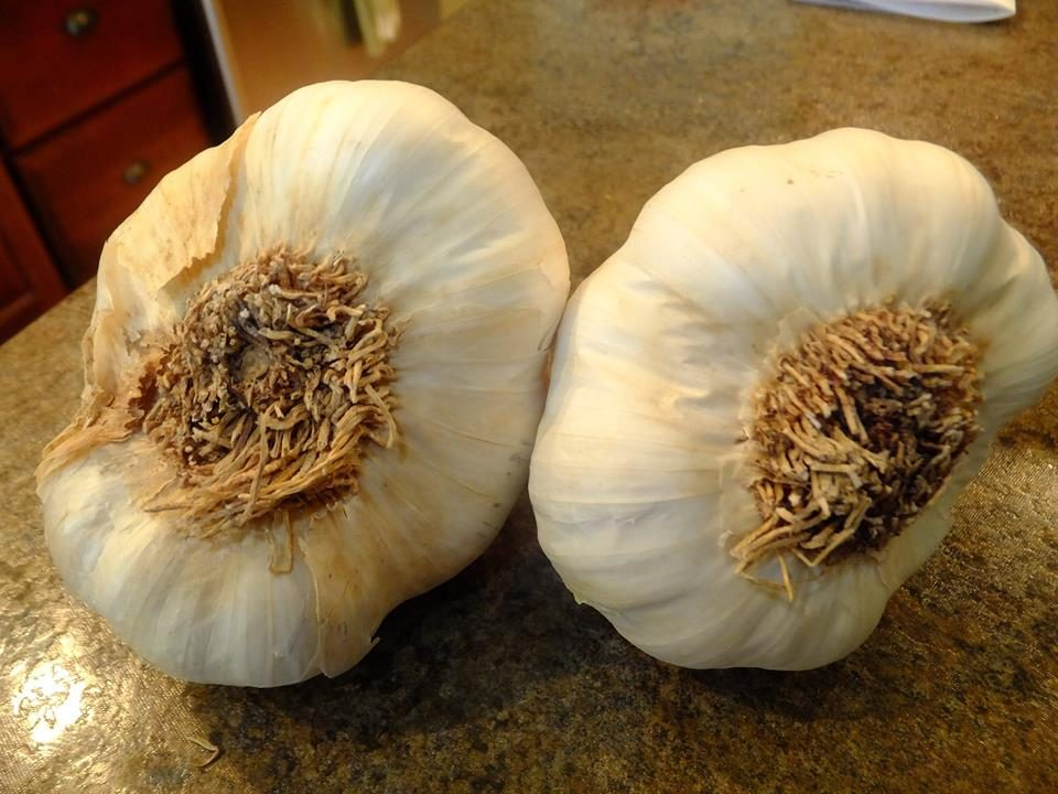 how to identify chinese grown garlic