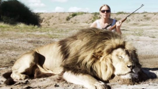 fact check did a lion take revenge on a trophy hunter