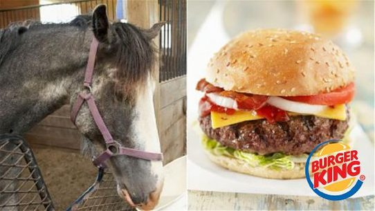 fact check did burger king admit their burgers contain horsemeat