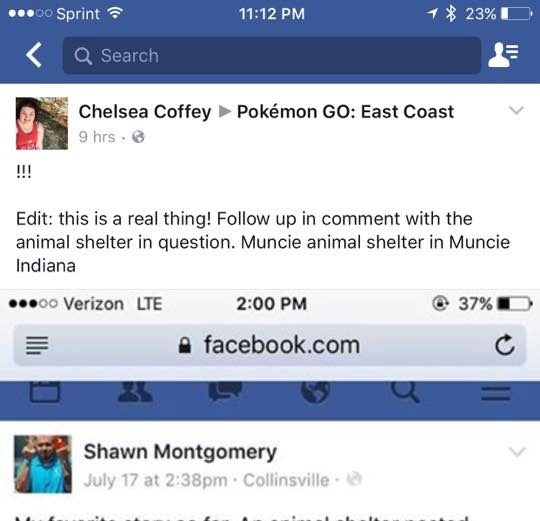 pokemon go shelter