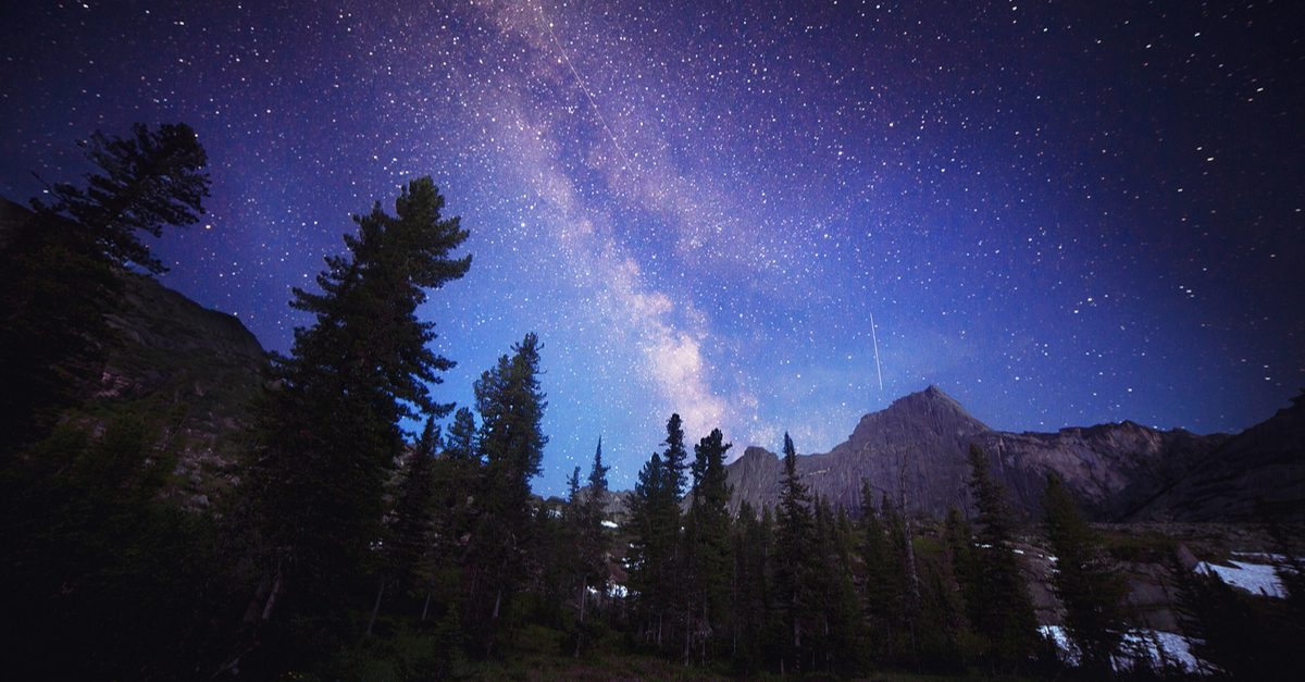 FACT CHECK: Are There More Trees on Earth Than There Are Stars in the Milky Way?