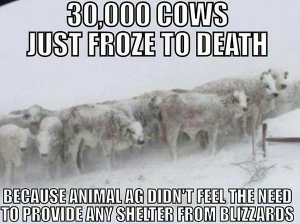 30000 cow deaths