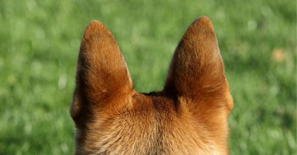 Image result for cute dog ears