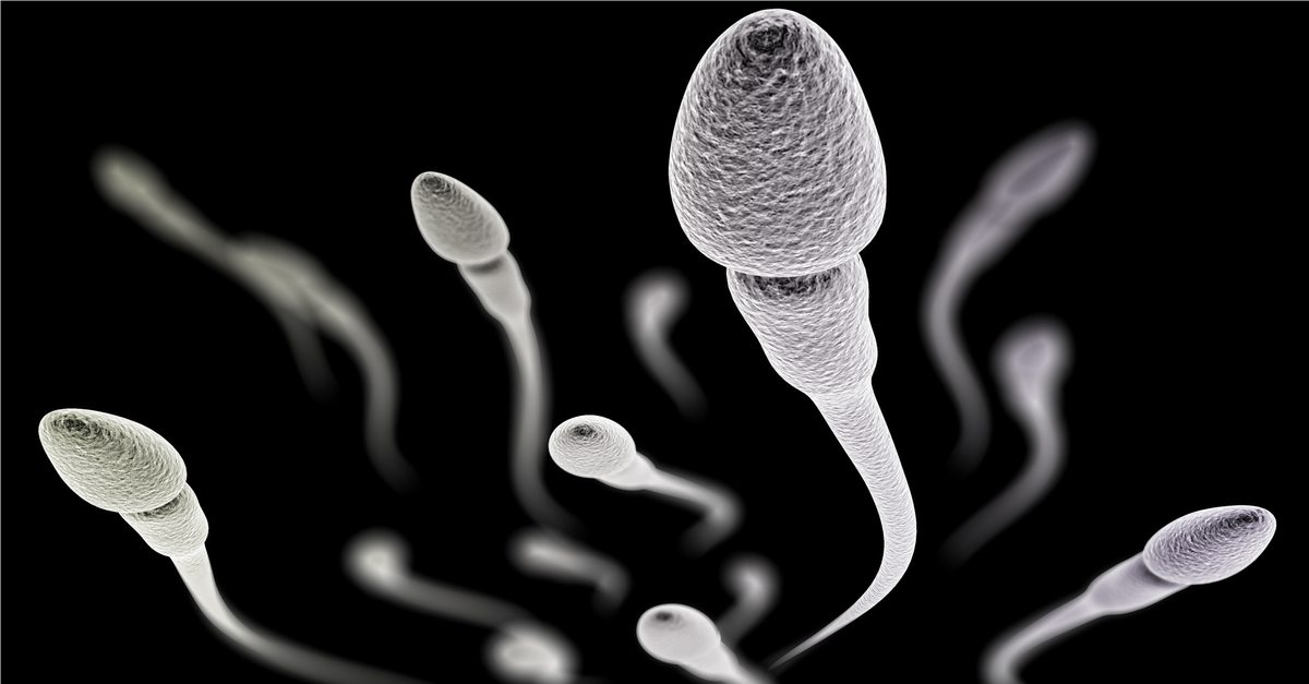 male production sperm