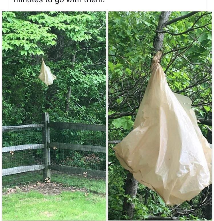 bag in tree dog theft