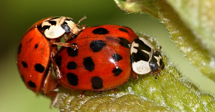 Fact Check Does This Photograph Show Beetles Embedded In