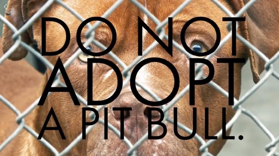 """Is a """"Do Not Adopt a Pitbull"""" Ad Airing During the Super Bowl?"""