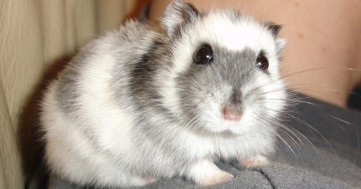 Airline Told Me to Flush Support Hamster Down Toilet, Flier Says
