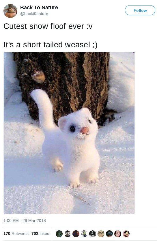 Fact Check Is This A Short Tailed Weasel