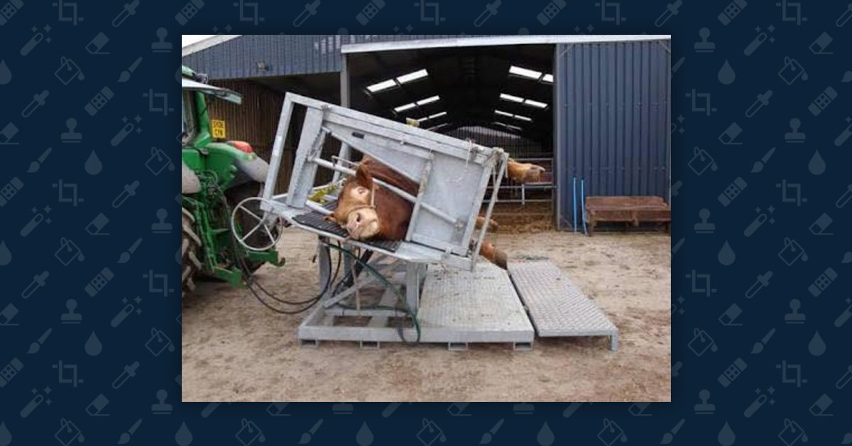 FACT CHECK: Is This an Image of a 'Cow Crusher' Device Designed To Crush Cows?