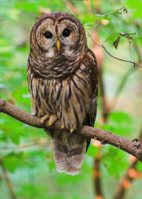 FACT CHECK Is This A Photograph Of Rainbow Owl