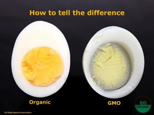 Difference Between Organic And Regular Food