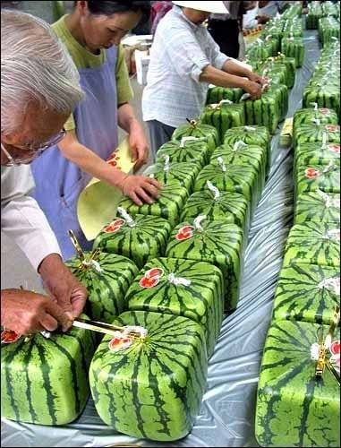 Are These Square Watermelons Real?
